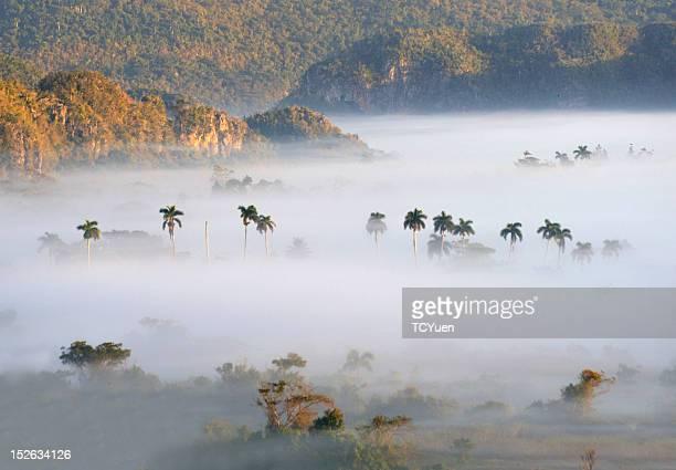 vinales in morning mist - valle de vinales stock-fotos und bilder