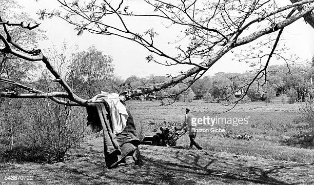 Vincent Antonovish of Boston left his shirt on a branch as he cut the grass in 80degree weather at the Arnold Arboretum in Boston on May 23 1966
