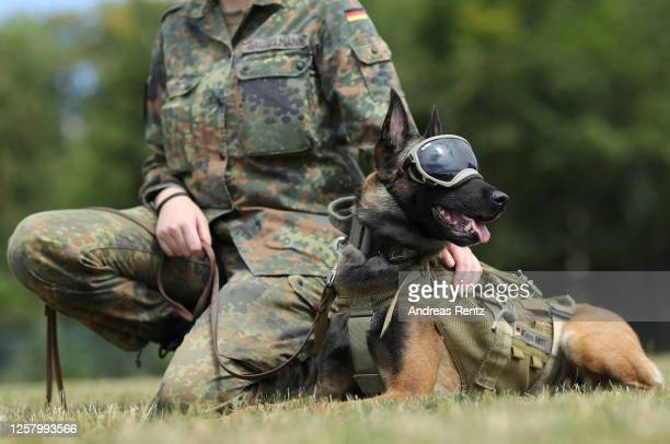 Vine a specially trained explosives detection dog wearing special dog sunglasses and his dog handler Bundeswehr member Giulia Gauselmann are seen at...