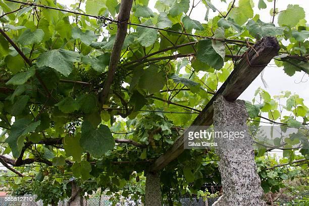 vine, combarro, concejo de poio, rias bajas, pontevedra, galicia - turista stock-fotos und bilder