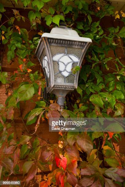 Vine covered house lamp in autumn, Magog, Eastern Townships, Quebec, Canada