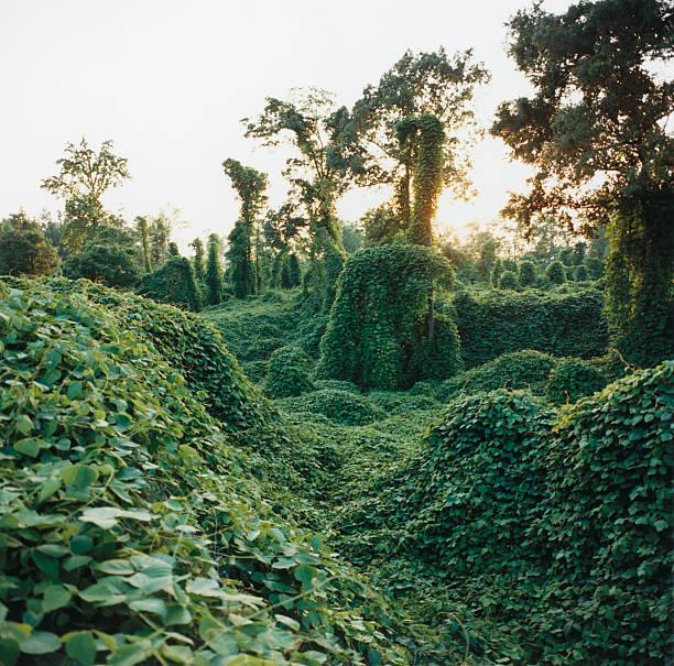 Vine Covered Landscape