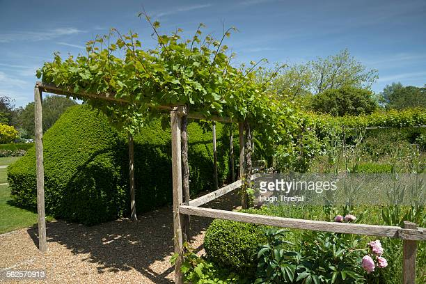 vine covered walkway - hugh threlfall stock pictures, royalty-free photos & images