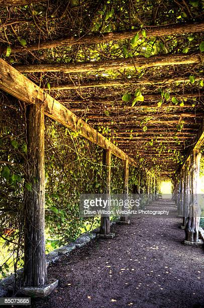 vine covered walkway - dave wilson webartz stock pictures, royalty-free photos & images