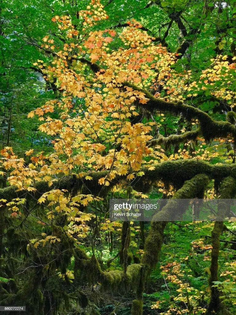 Unique Coloring Tree Crest - Coloring Page - senderolasbrumas.info