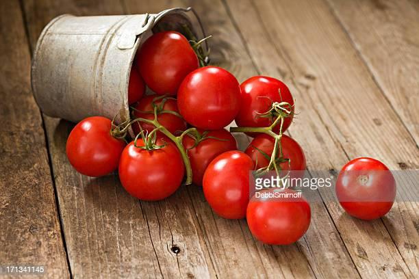 Videira tomates maduros em um balde