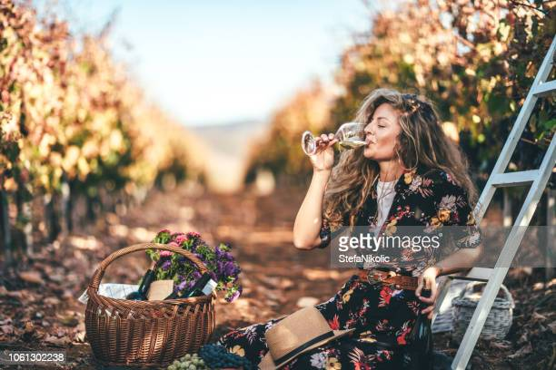 vine tasting - grape harvest stock pictures, royalty-free photos & images