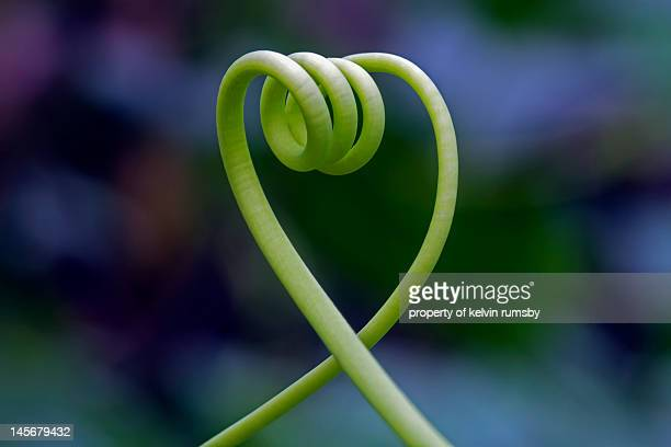 Vine tendril in a heart shape