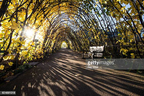vine tunnel in kensington gardens. - hyde park london stock photos and pictures