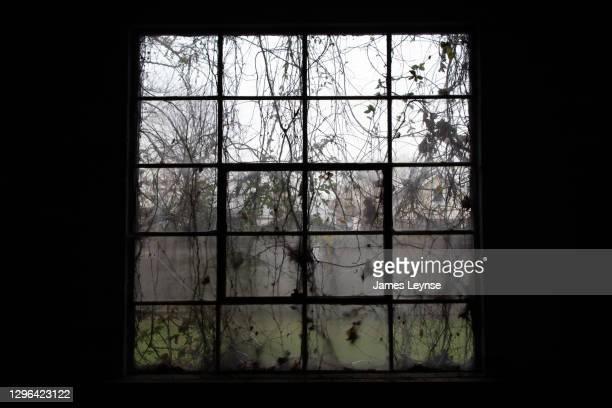 vines and branches creep through a broken window in an abandoned factory in new jersey - woodbridge nueva jersey fotografías e imágenes de stock
