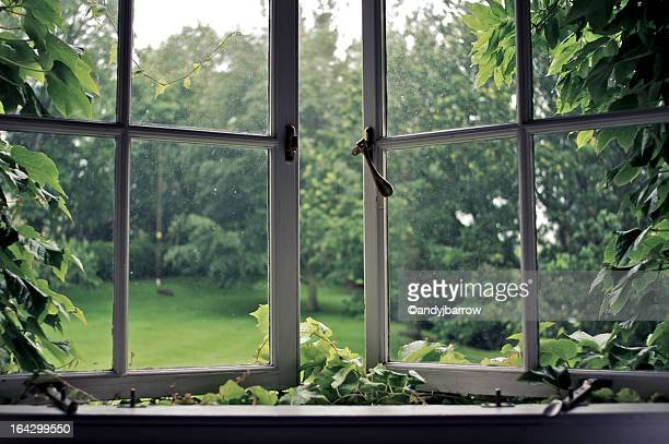 vines around an old ajar window - window stock pictures, royalty-free photos & images