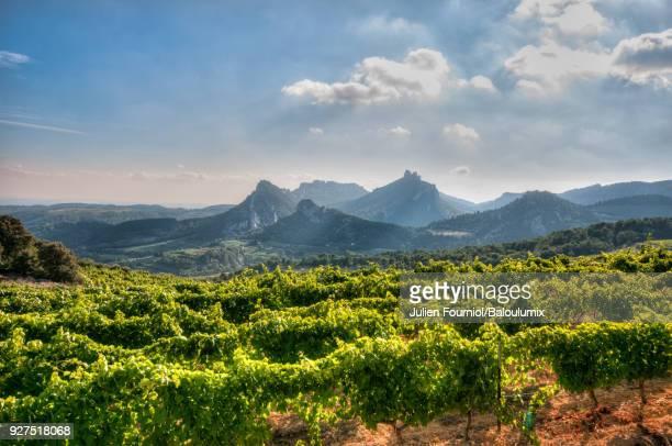 Vines at the foot of the Dentelles de Montmirail