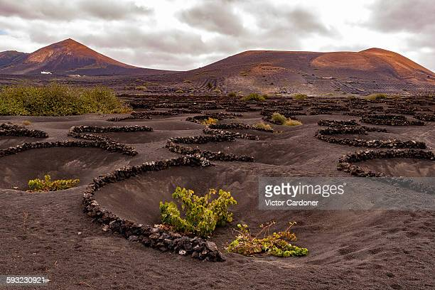 Vines on black soil of volcanic ash, Lanzarote