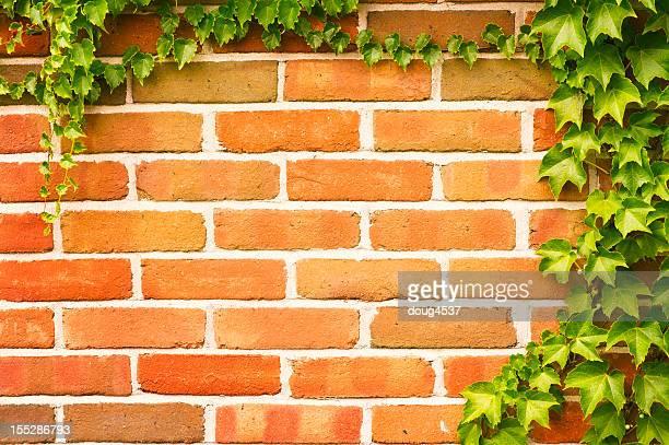 Vines on Brick Wall