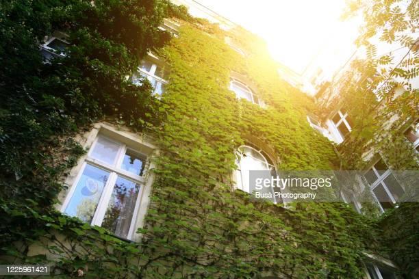 vines over facade of residential building in berlin, germany - 生い茂る ストックフォトと画像