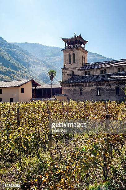Vines surrounding Cizhong Church a stone and stucco church built in 1910 by early French missionaries in Cizhong a small village that sits on the...