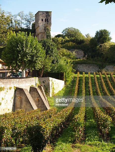 Vines con sguardo tower