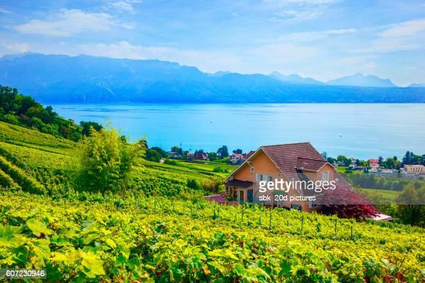 vineyard 05 - genève zwitserland stockfoto's en -beelden