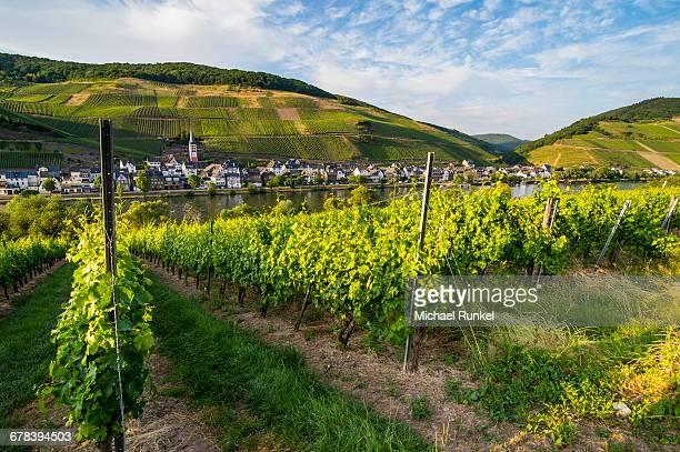 Vineyard above Zell, Moselle Valley, Rhineland-Palatinate, Germany, Europe