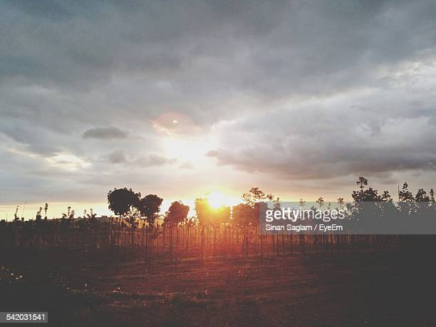 Vineyard Against Cloudy Sky During Sunset