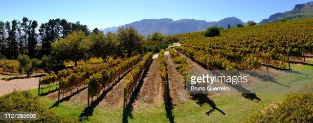 vineyard against mountains and sky - stellenbosch stock pictures, royalty-free photos & images
