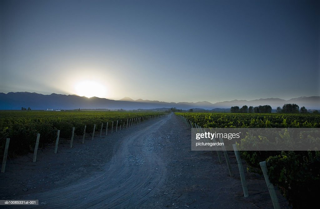 Vineyard and dirt track with Andean mountain range in background : Foto stock