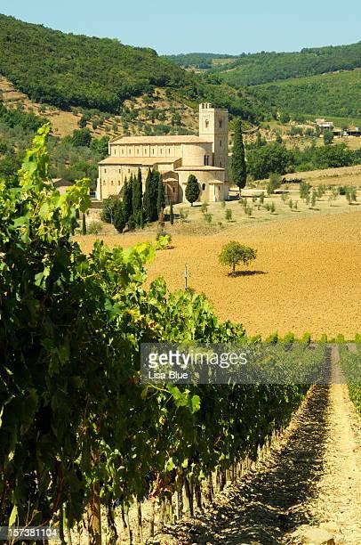 Vineyard und mittelalterlichen Abbey in der Toskana