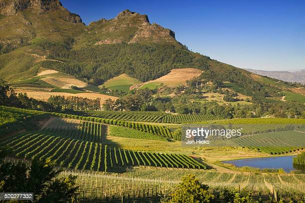 vineyard and mountains - stellenbosch stock pictures, royalty-free photos & images
