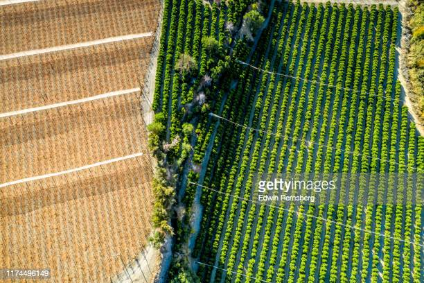 vineyard and orchard - latin america stock pictures, royalty-free photos & images