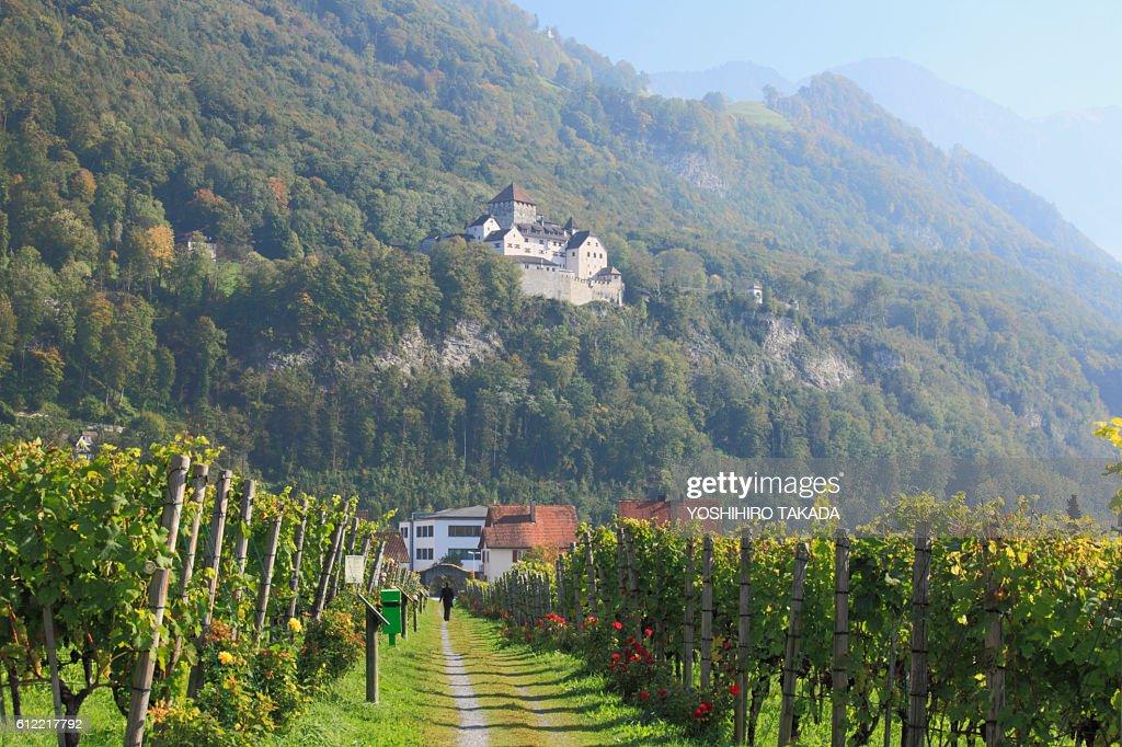 Vineyard and Vaduz Castle : Stock Photo