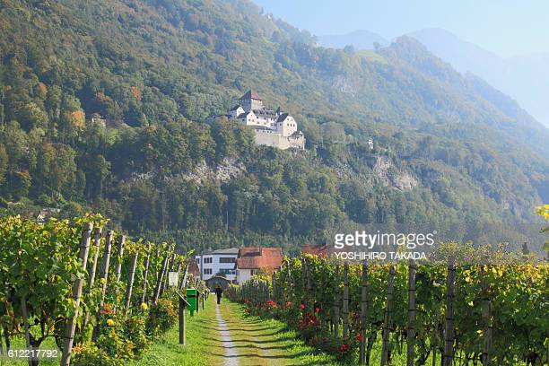 vineyard and vaduz castle - liechtenstein stock pictures, royalty-free photos & images
