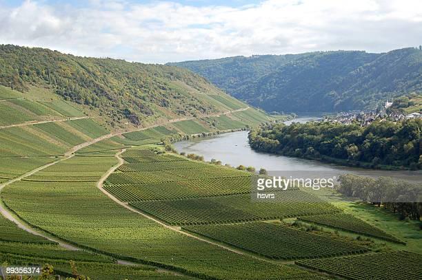 ブドウ園でドイツモーゼル川 - コブレンツ ストックフォトと画像