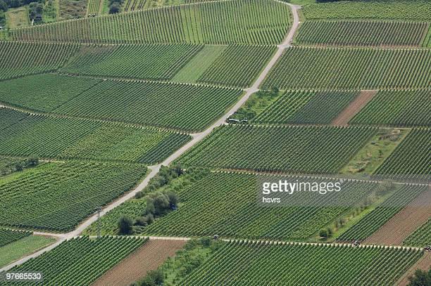 Vineyard at German Rhine River