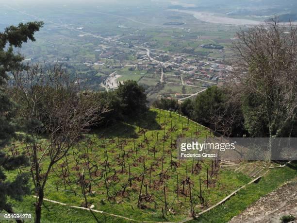 Vineyard At Meteora, Greece