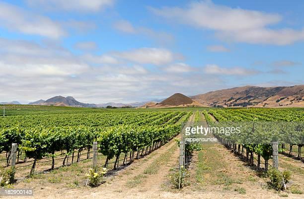 vineyard at San Luis Obispo, California