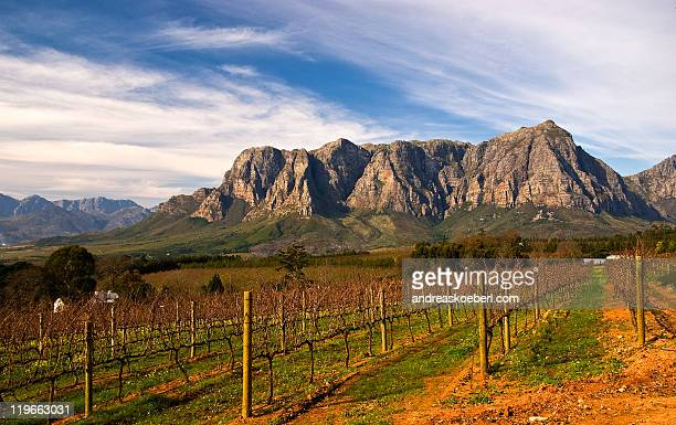 Vineyard at Stellenbosch winery with mountains