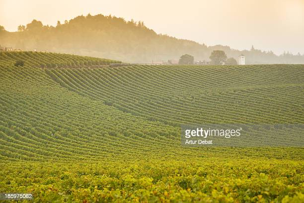 vineyard at sunset in the switzerland's lac leman. - kanton waadt stock-fotos und bilder