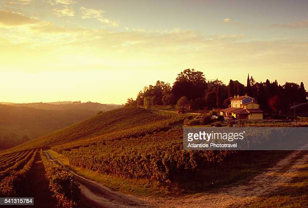 vineyard at sunset - emilia romagna stock pictures, royalty-free photos & images