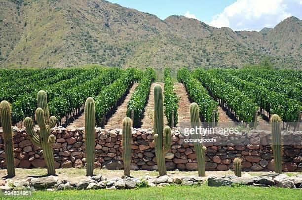 vineyard, cafayate, salta, argentina - salta argentina stock photos and pictures