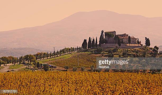 トスカーナのブドウ園の城 - モンタルチーノ ストックフォトと画像