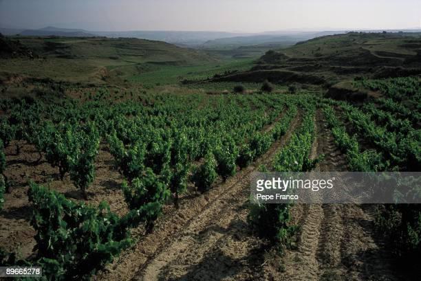 Vineyard Detail of a vineyard