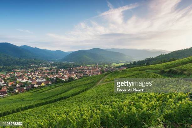 vineyard during sunset (alsage) - village stock pictures, royalty-free photos & images
