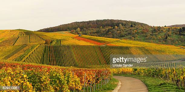 Vineyard fall colors in Weinstadt, Germany