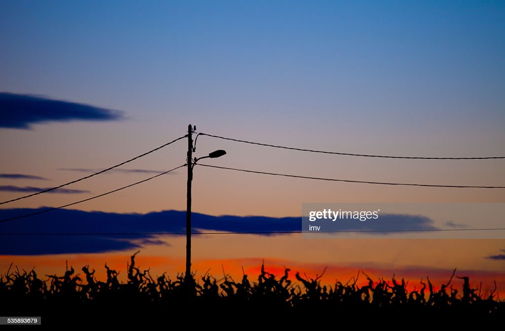 Vineyard field at dawn : Stock Photo