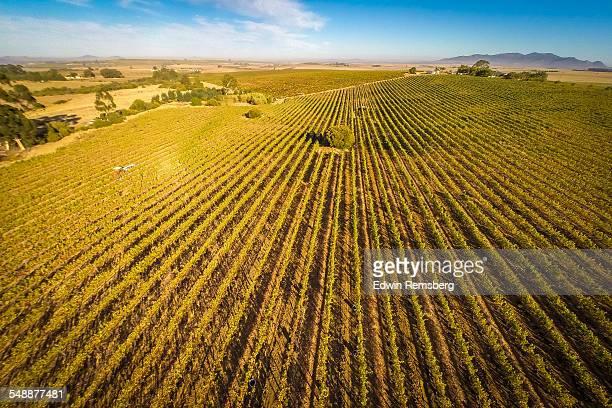 Vineyard Fields