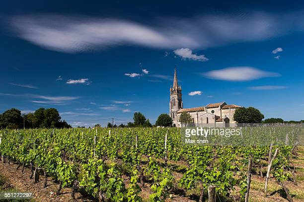 Vineyard in Bordeaux