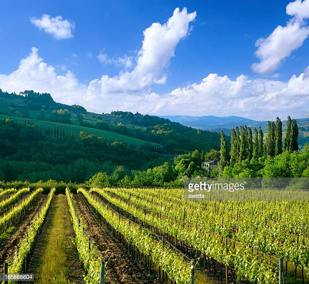 Vineyard in Italy, Tuscany