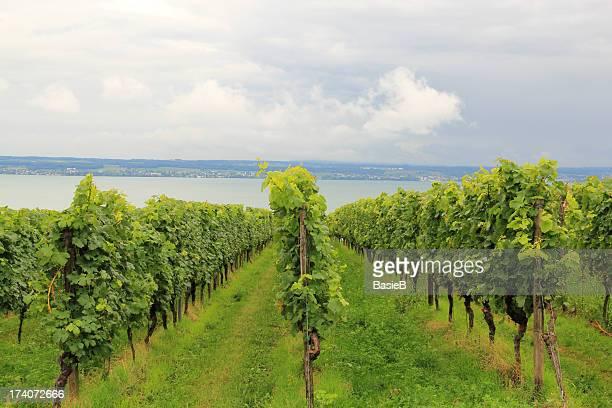 viñedo en meersburg - lago constanza fotografías e imágenes de stock