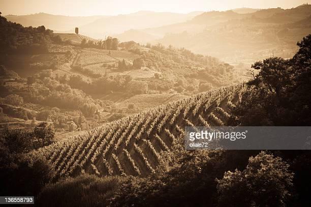 Vineyard in Monferrato - Piedmont, Italy