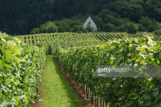 vineyard in mosel valley with church - moselle stock pictures, royalty-free photos & images
